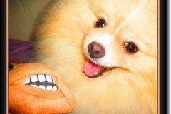B-Joey Venerable - krycí pes
